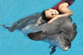 АКЦИЯ «Оседлай Дельфина»!!! Туры в Египет