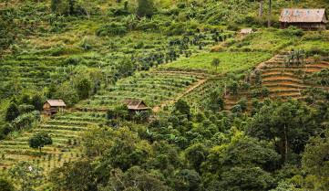 Кофейные плантации, Вьетнам