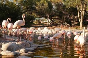 зоопарк в Бахрейні