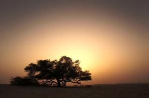 дерево життя в Бахрейні