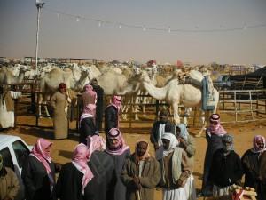 виставка верблюдів