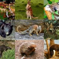 Животные, ради которых стоит отправиться в Австралию