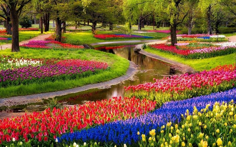 найгарніші квіти світу фото