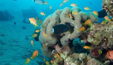 Кораллы, Акаба