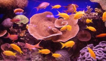 Подводный мир, Эйлат