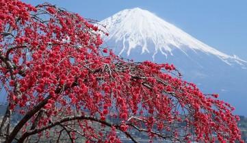 Вулкан Фудзияма, Хонсю