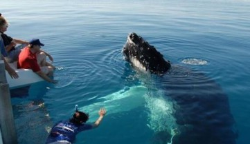 Наблюдение за китами, Лос-Кабос