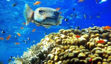 Подводный мир, Шарм-эль-Шейх