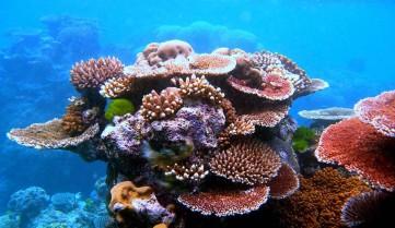 Кораллы, Большой Барьерный риф