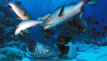 Рыбы, Большой Барьерный риф