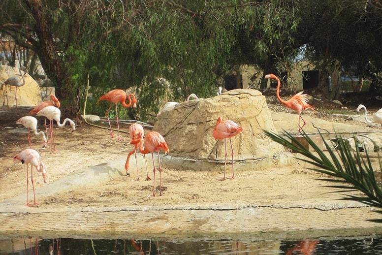 Зоопарк Фригия, Хаммамет