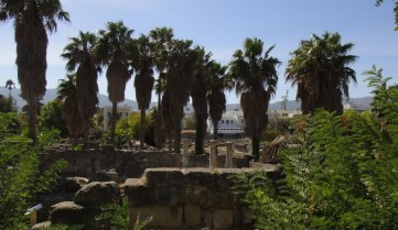 Растительность на острове