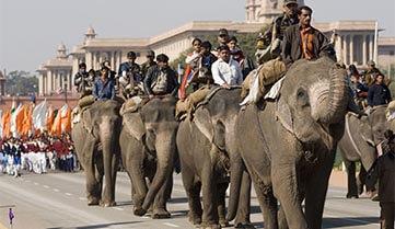 Слони, Індія