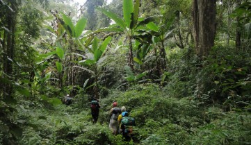 Покорение джунглей