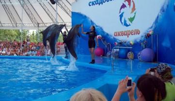 Дельфинарий Скадовска