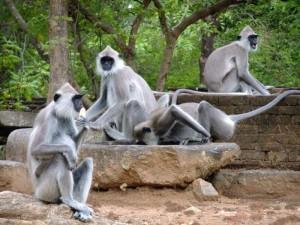 в Шри-Ланку с детьми
