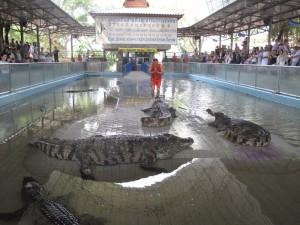 Таиланд, крокодилья ферма