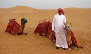 катание на верблюдах в ОАЭ
