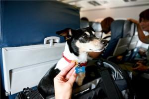 перевоз животных в самолете