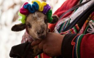 Перуанские новогодние традиции