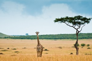 авиабилеты в Африку