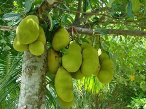 рослинний світ Бангладешу