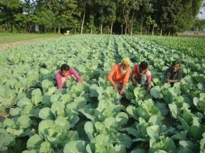 пища в Бангладеше