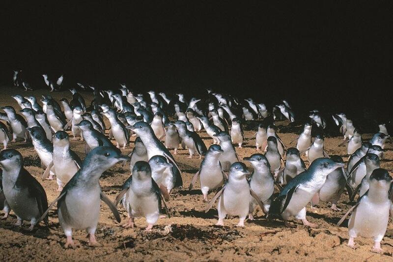 Путешествия по Австралии: остров Филиппа