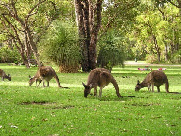 Путешествия в Австралию: остров Кенгуру