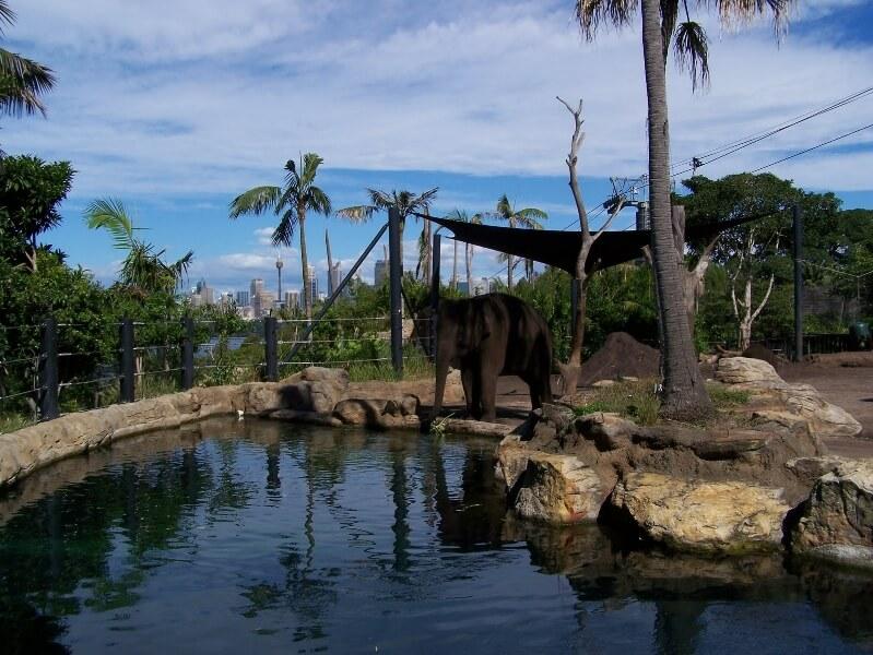 Зоопарк Таронга в Австралии