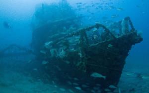 подводный мир Новой Зеландии