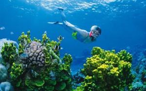 подводный мир Австралии