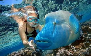 підводний світ Мальдів