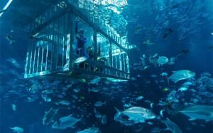 погружение под воду в ОАЭ