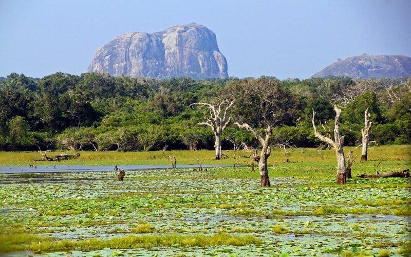 Национальный заповедник Кумана, Шри-Ланка