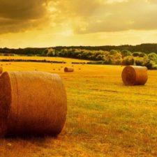 Международные выставки сельского хозяйства