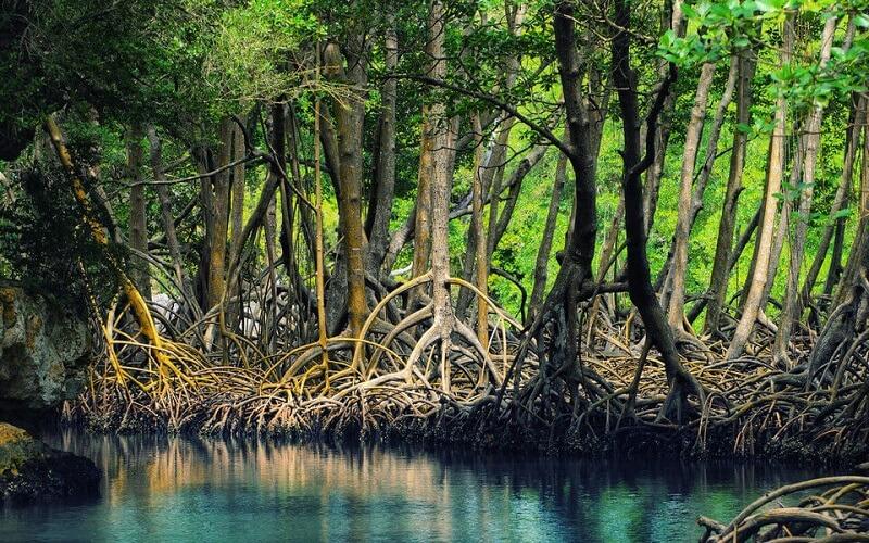 національний парк Ель-Чоко