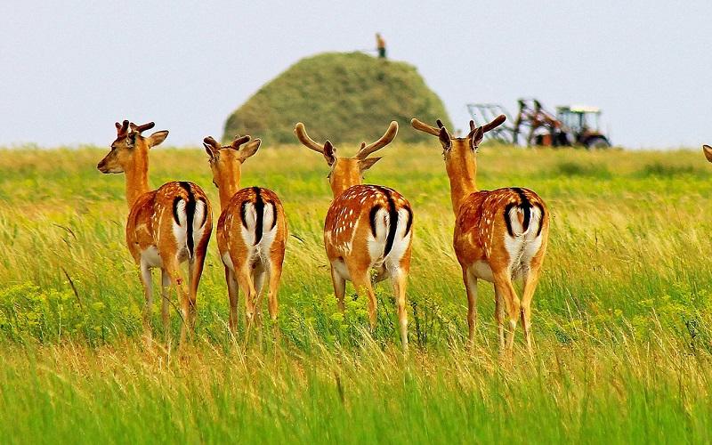 Животные Азово-Сивашский национальный природный парк, Украина