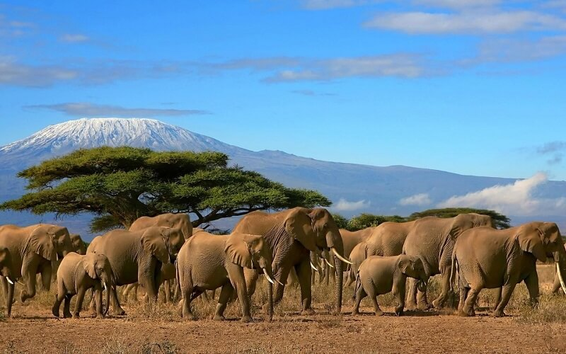 Сафарі в Танзанії