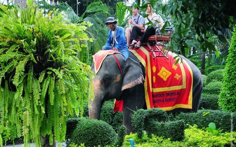 Слони в Таїланді