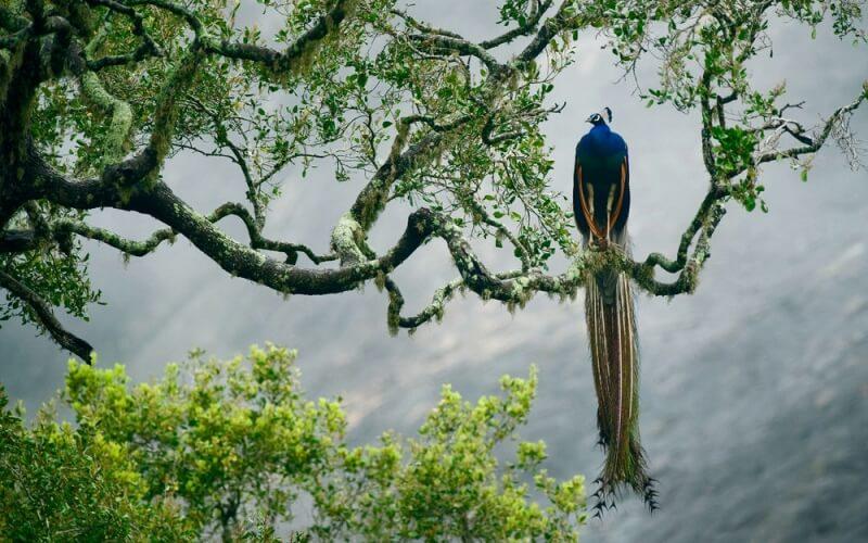 парк Яла, Шрі-Ланка