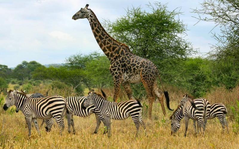 парк Серенгеті, Танзанія
