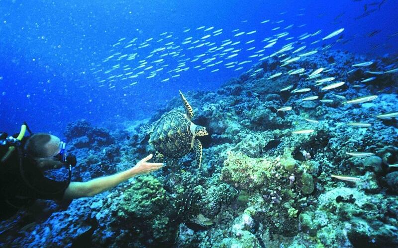 Подводный мир Сейшел