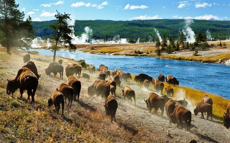 Йеллоустонский национальный парк, США