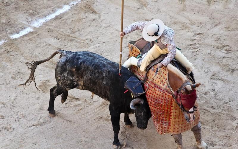 пікадор на коні дратує бика