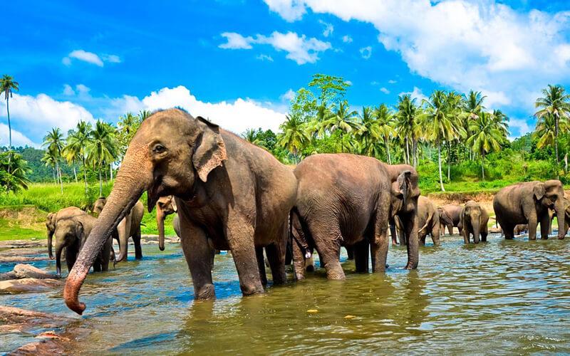 Шри-Ланка, дешевые билеты