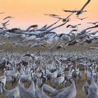 В Израиле пройдёт «птичий» фестиваль