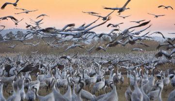В Ізраїлі пройде «пташиний» фестиваль