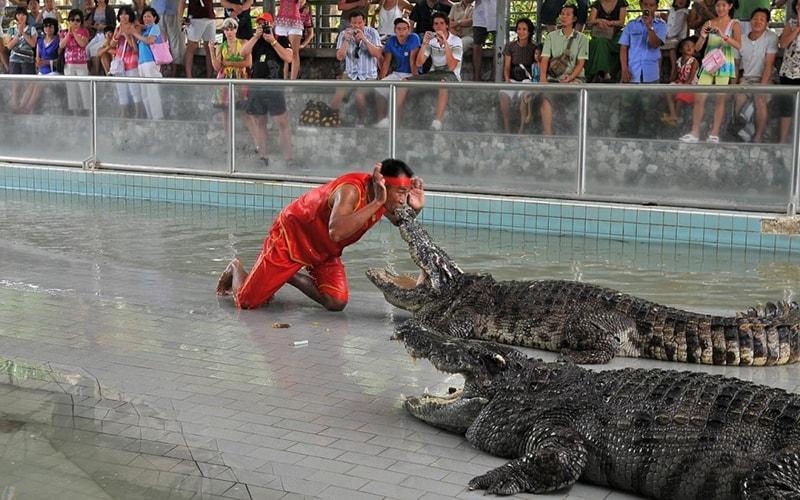 крокодилячі ферми