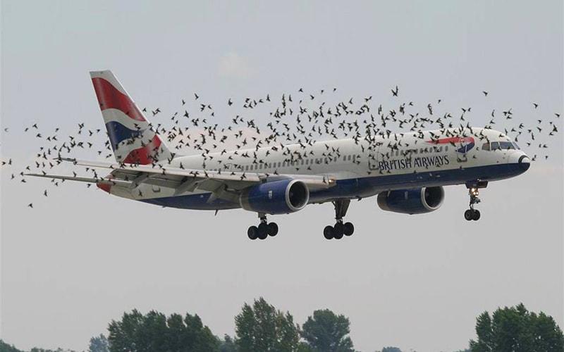 Страх польотів